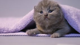 Baby kitten under a towel stock footage