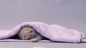Baby kitten under a towel stock video footage