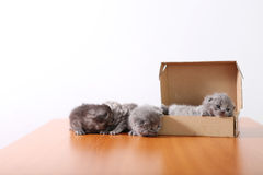 Baby kittens in a cardboard box Royalty Free Stock Photos