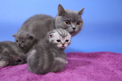 Baby kittens with her mom Stock Photos