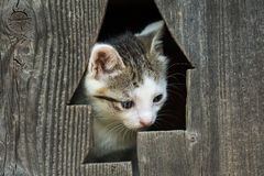 Baby Kitty Cat Portrait Lizenzfreie Stockfotografie