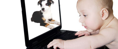 Baby and laptop. A 4 months old playing with laptop with a dog in the screen Stock Photography