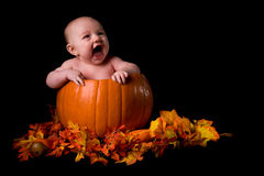 Baby in Large Pumpkin Isolated on Black Stock Photography