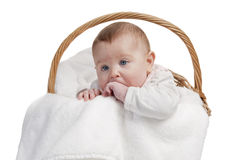 Baby in laundry basket Stock Image