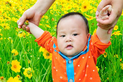 Baby learning to walk. In the flower fields baby learning to walk royalty free stock photos