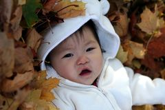 Baby in Leaves. Baby enjoying her time in the autumn leaves Royalty Free Stock Image
