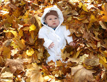 Baby in the leaves serious Stock Photos