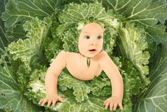 Baby in leaves streaked with ornamental cabbages Royalty Free Stock Photography