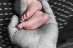 Baby legs in father`s hand royalty free stock photo
