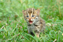 Baby leopard cat Stock Photo