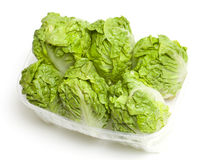 Baby lettuce Royalty Free Stock Photos