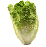 Baby Lettuce. On white background Royalty Free Stock Images