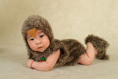 A baby like hedgehog. Baby dressed as hedgehog to lie on the floor royalty free stock photo