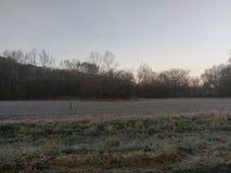 Baby lismar hjortar i fält Arkivbilder