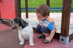 Baby with little dog on the playground Stock Images