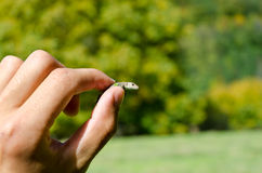 Baby Lizard. In man hand Royalty Free Stock Photography