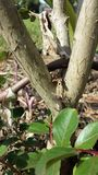 Baby Lizard stock image