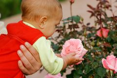 Baby looking at pink rose Stock Photo