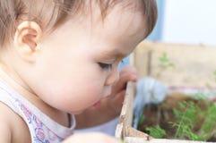 Baby looking seedlings Royalty Free Stock Photo