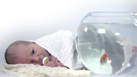 Baby looks the fishes which swim in the aquarium in slow motion stock video