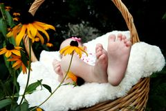 Baby Lying on Brown Woven Basket Beside Susan Eyed Daisies during Day Royalty Free Stock Photos