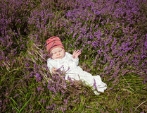 Baby lying on heather Stock Photos