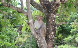 Baby macaque sitting on a tree and sad royalty free stock image