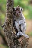 Baby-Makaken im Wald Lizenzfreies Stockfoto