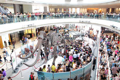 Baby Mammoth of the Ice Age Exhibition in H.K. Stock Images
