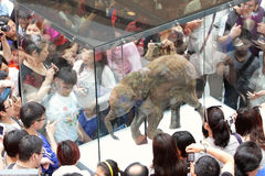 Baby Mammoth of the Ice Age Exhibition in H.K. Royalty Free Stock Images