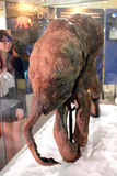 Baby Mammoth of the Ice Age Exhibition in H.K. Royalty Free Stock Photos