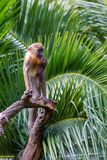A baby mandril baboon with hand on under chin on 3rd April 2018 stock photos