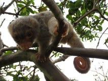 Baby Mann beschmutztes cuscus Stockfotografie