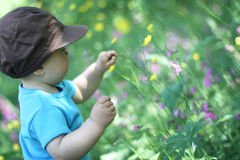 A baby in a meadow. A small baby looking at the flowers in a meadow Royalty Free Stock Photos
