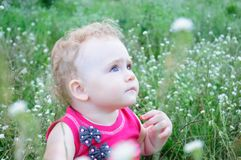 Baby on the meadow Stock Images