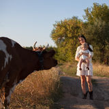 Baby meets a cow Stock Photos