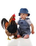 Baby Meets Rooster Stock Photos