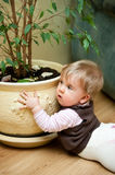 Baby mess at home. Baby girl making mess at home, trying to reach for soil from pot plant Royalty Free Stock Photos