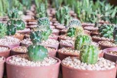 Baby mischte Kaktus unter anderem Kaktus in einem Topf im Kaktusbauernhof Lizenzfreies Stockbild