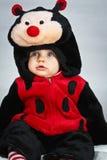 Baby mit einem Marienkäferkostüm Stockbild