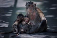 Baby and mom of monkey family royalty free stock image