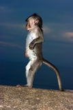 Baby monkey Stock Image