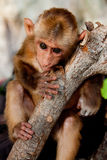 Baby monkey. A baby monkey outside a cave on a beautiful Railay Beach, Krabi, Thailand royalty free stock photos