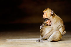 Baby monkey. With mother in temple of Thailand Royalty Free Stock Photography
