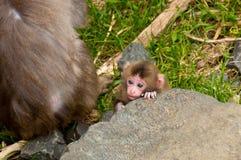 Baby Monkey Stock Photo