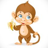 Baby monkey with banana stand on a white background Royalty Free Stock Photography