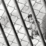 Baby monkey in a cage Stock Photos