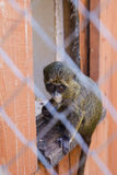 Baby monkey in cage in zoo Stock Photos