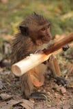 Baby monkey eating Stock Photo