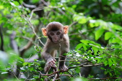 Baby monkey at golden hill, hong kong Stock Images